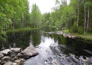 flora de Laponia