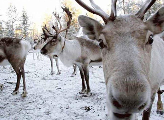 Flora Fauna Laponia