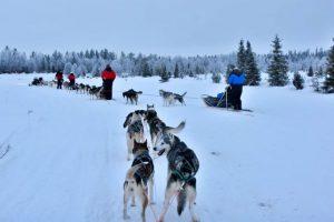 Trineo de perros - Laponia