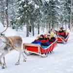 Paseo en Trineo de Renos - Laponia