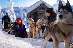 Granja de Huskies Siberianos - Laponia