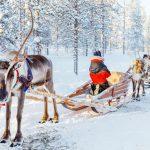 Trineo de renos - Kuusamo - dia 2