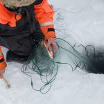Pesca en hielo - Nellim dia 4