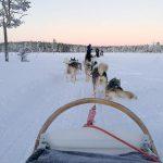 Trineo de perros - Navidad en Salla - dia 4