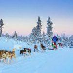 Trineo de perros - Actividades en Laponia