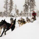 Grnaja huskies en ISO SYOTE