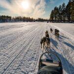 Trineo perros huskies en ISO SYOTE