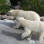 Zoo de Ranua